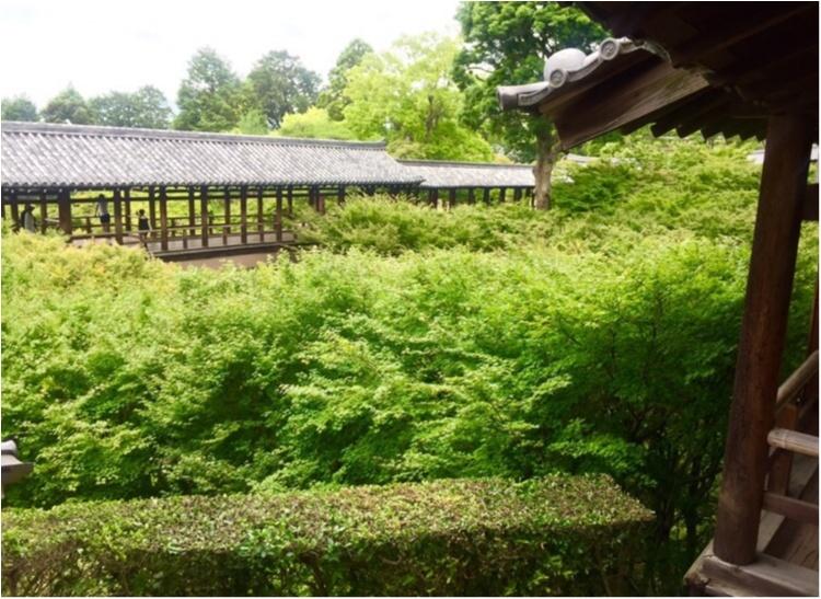 【京都】紫陽花を探しに東福寺へ、、思わぬ絶景に感動♡_6