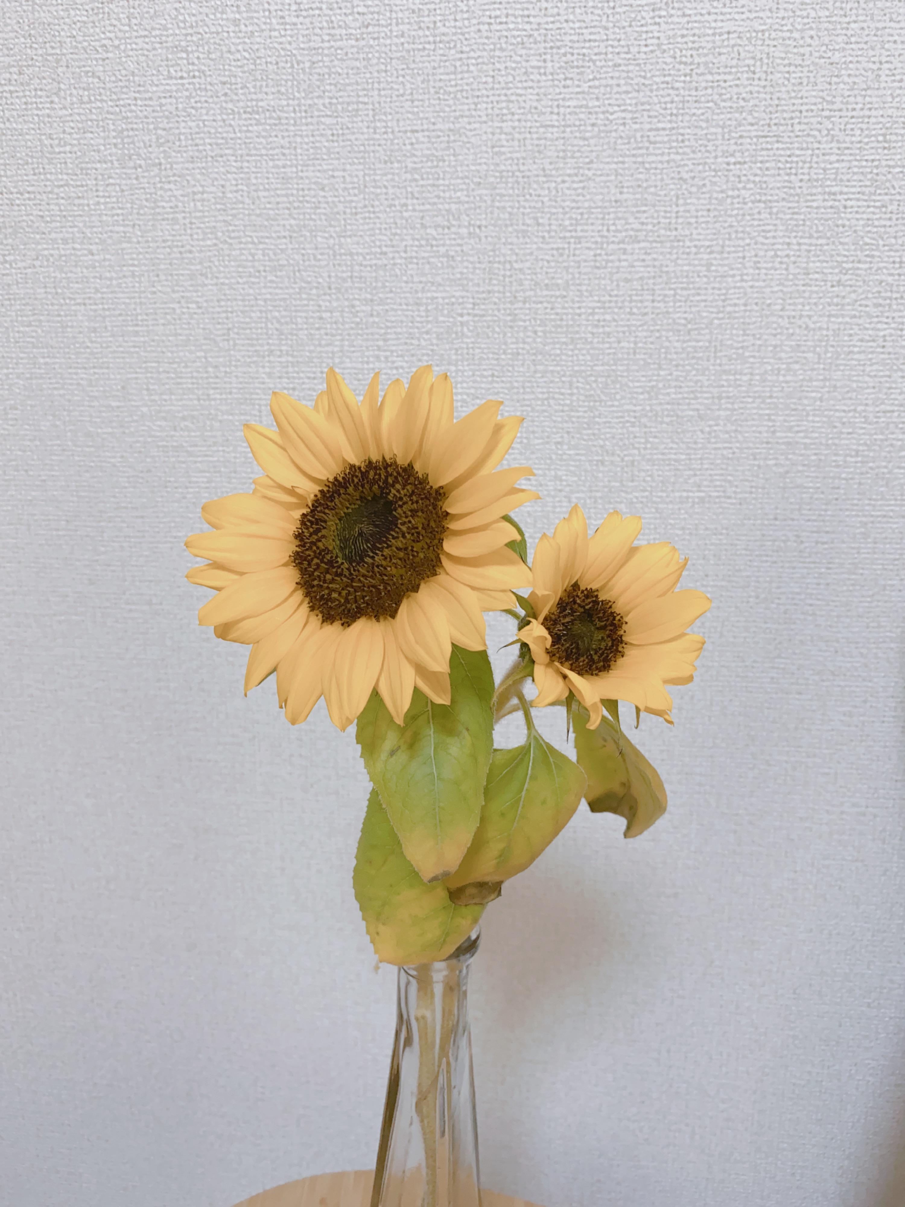《今週のお花》はこれでした♡_2