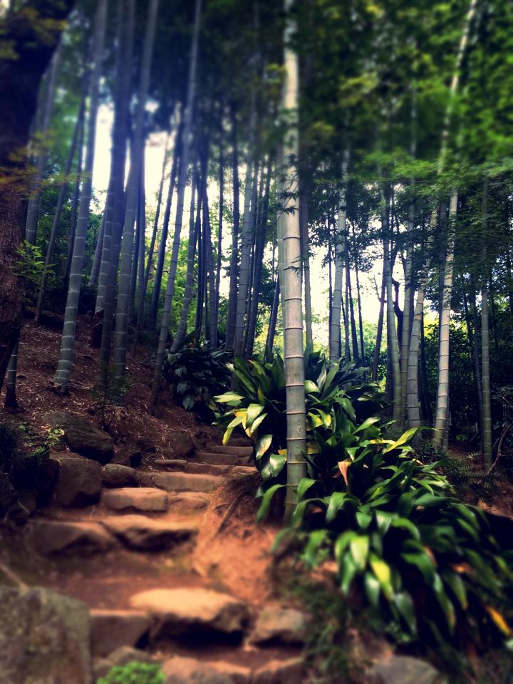 【癒しスポット】東京のオアシス。仕事に疲れたときは森林浴でリフレッシュ!_12