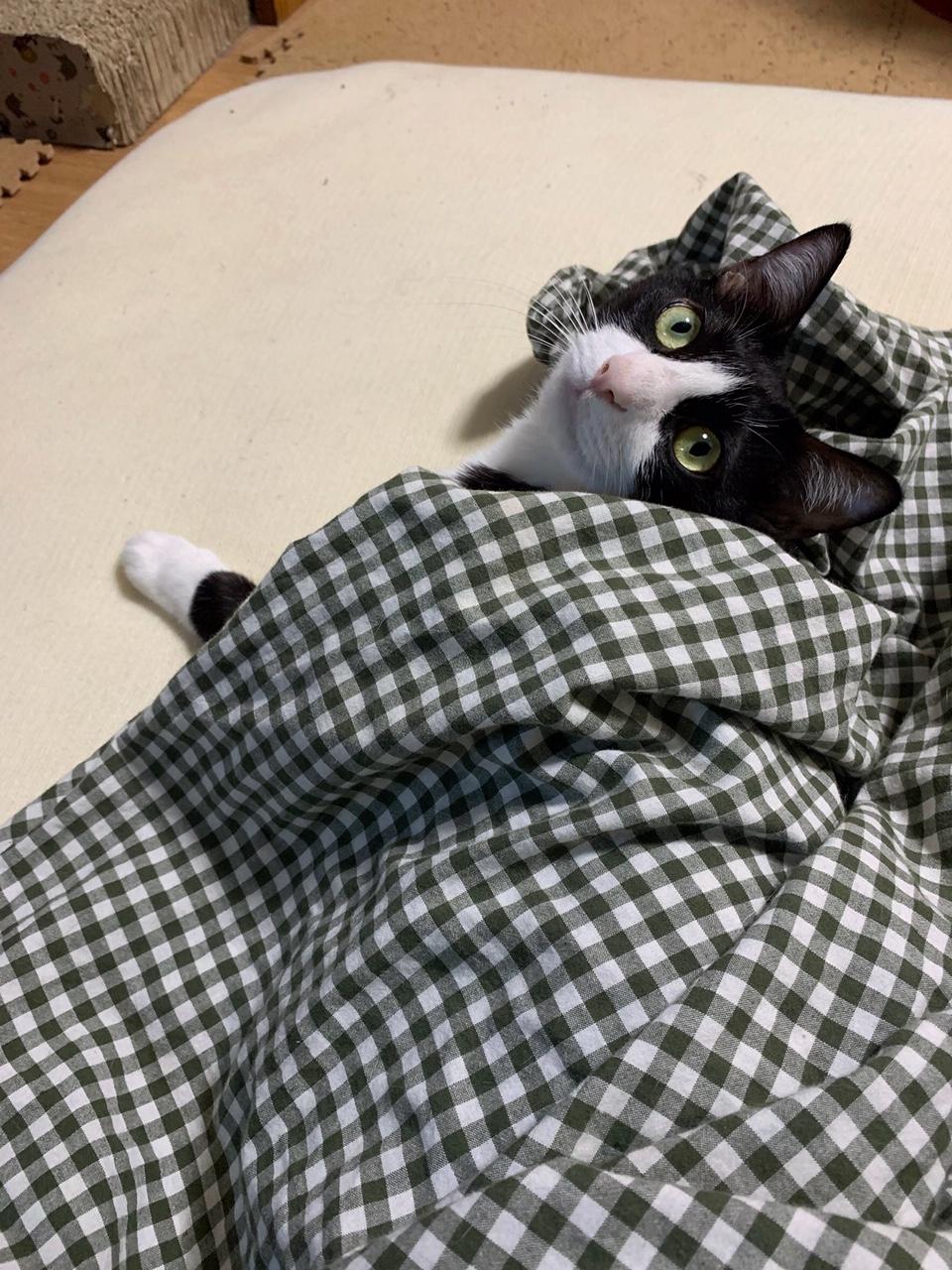 【今日のにゃんこ】夜更かしルウくん、布団から顔を出して伝えたいこととは?_1