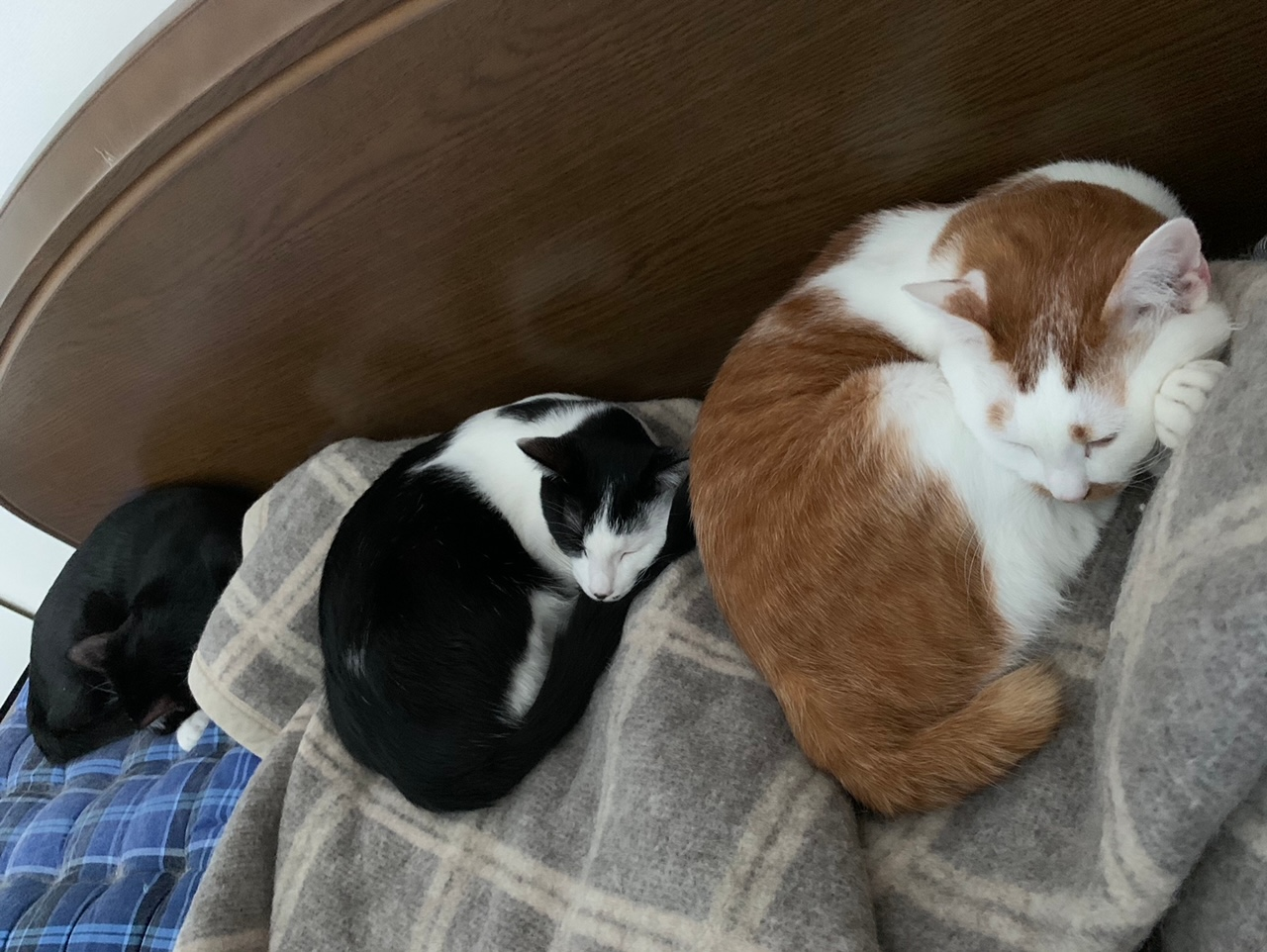 ラビ・ルウ・ベルくんが猫だんごになって眠っている様子