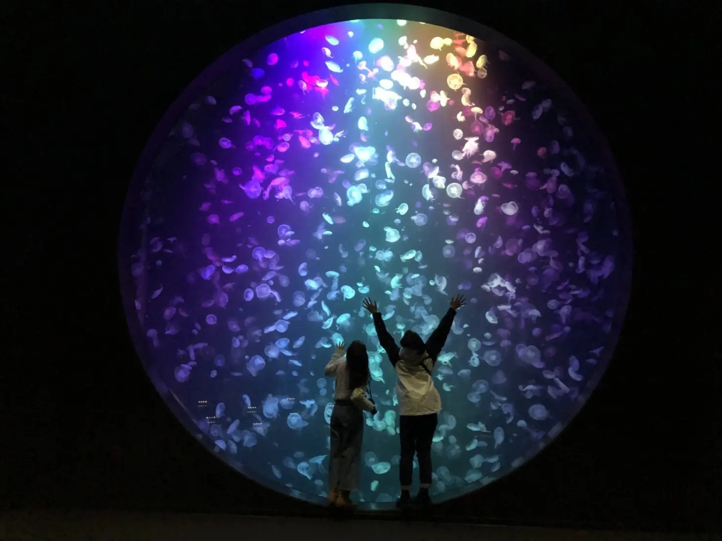 山形県の鶴岡市にある『加茂水族館』