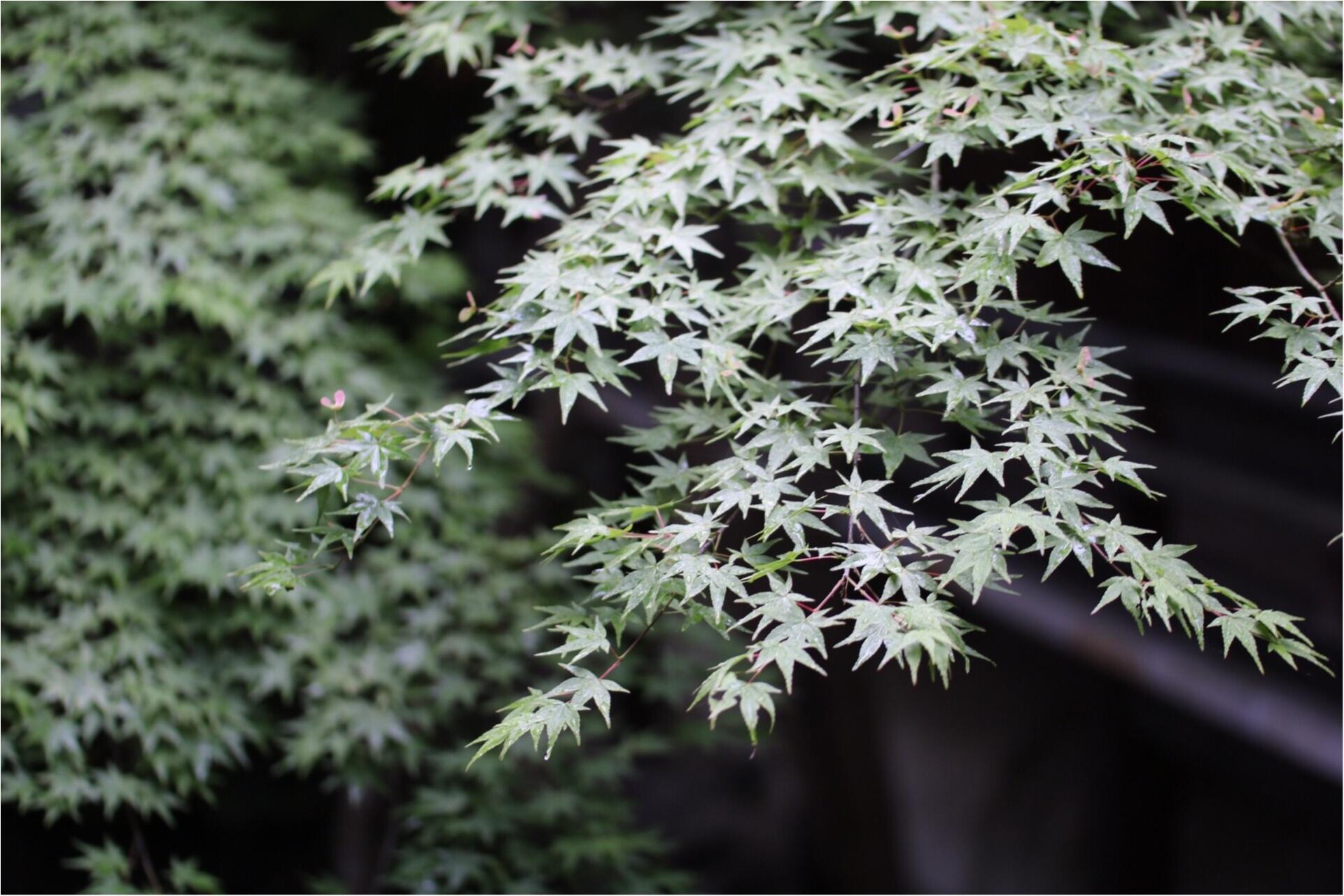 【京都】無鄰菴で新緑を眺めながら抹茶を飲みませんか?*_2