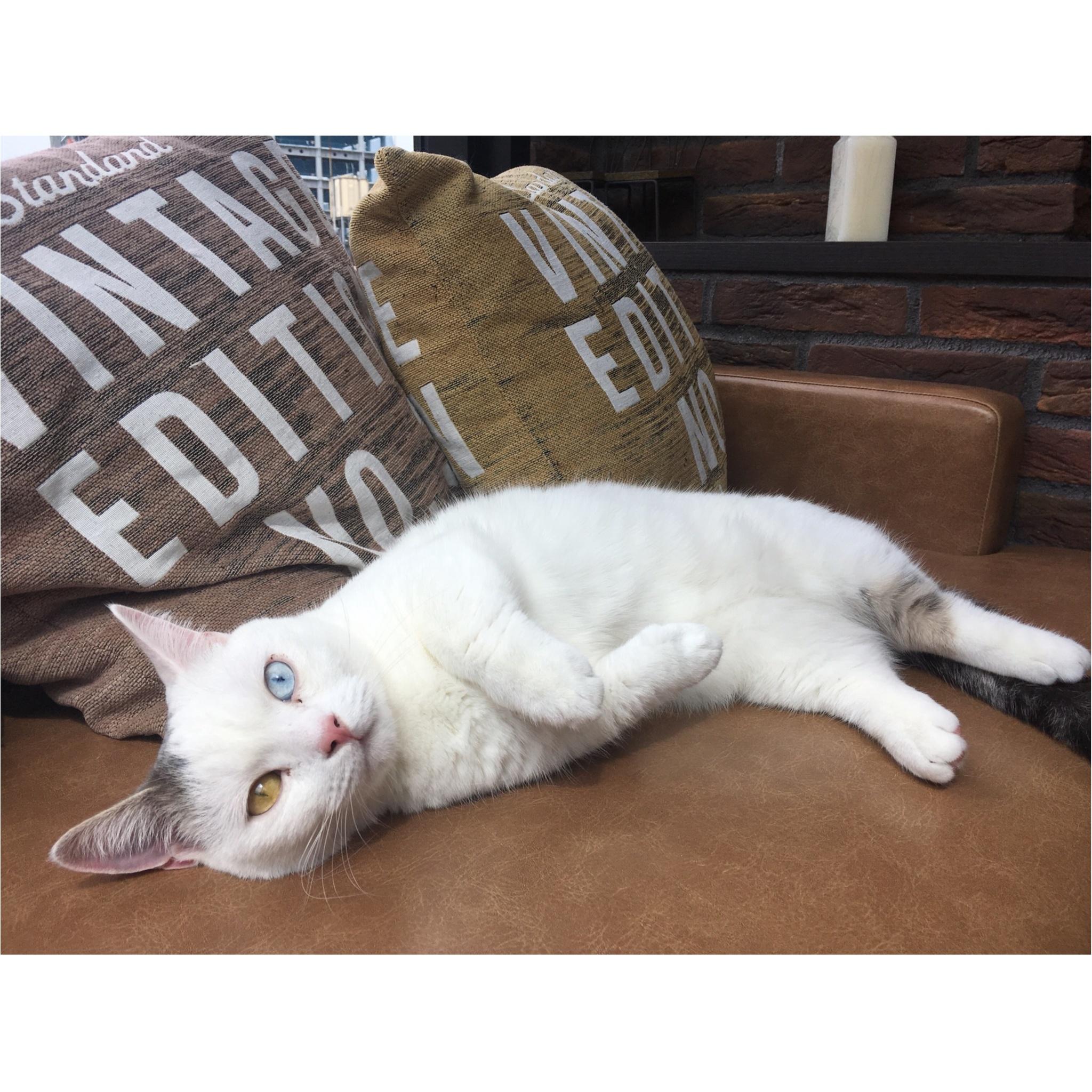 【猫カフェ】渋谷で癒しの猫カフェ♡今ならカワイイ子猫にも会えちゃう♪_5