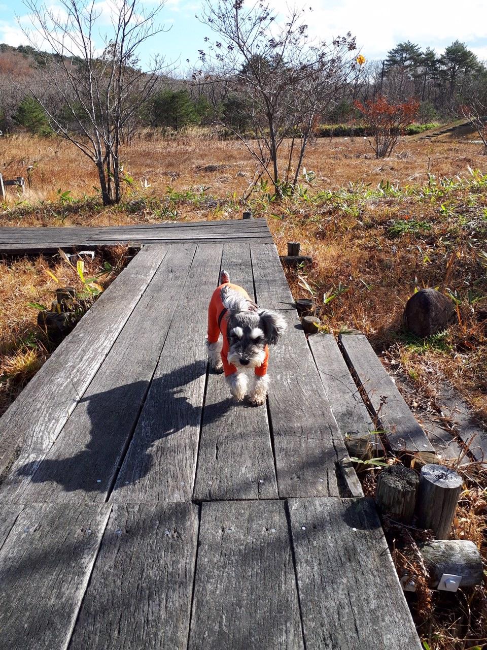 【今日のわんこ】遠くの公園に遊びにきたサクラちゃん_1