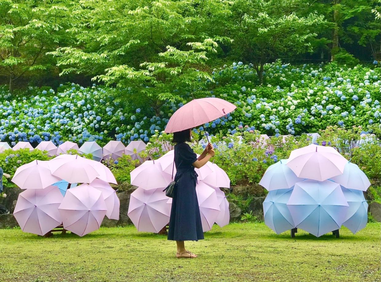 【風鈴×あじさい×傘】 風物詩が詰まったインスタ映えスポット 尊永寺①_4