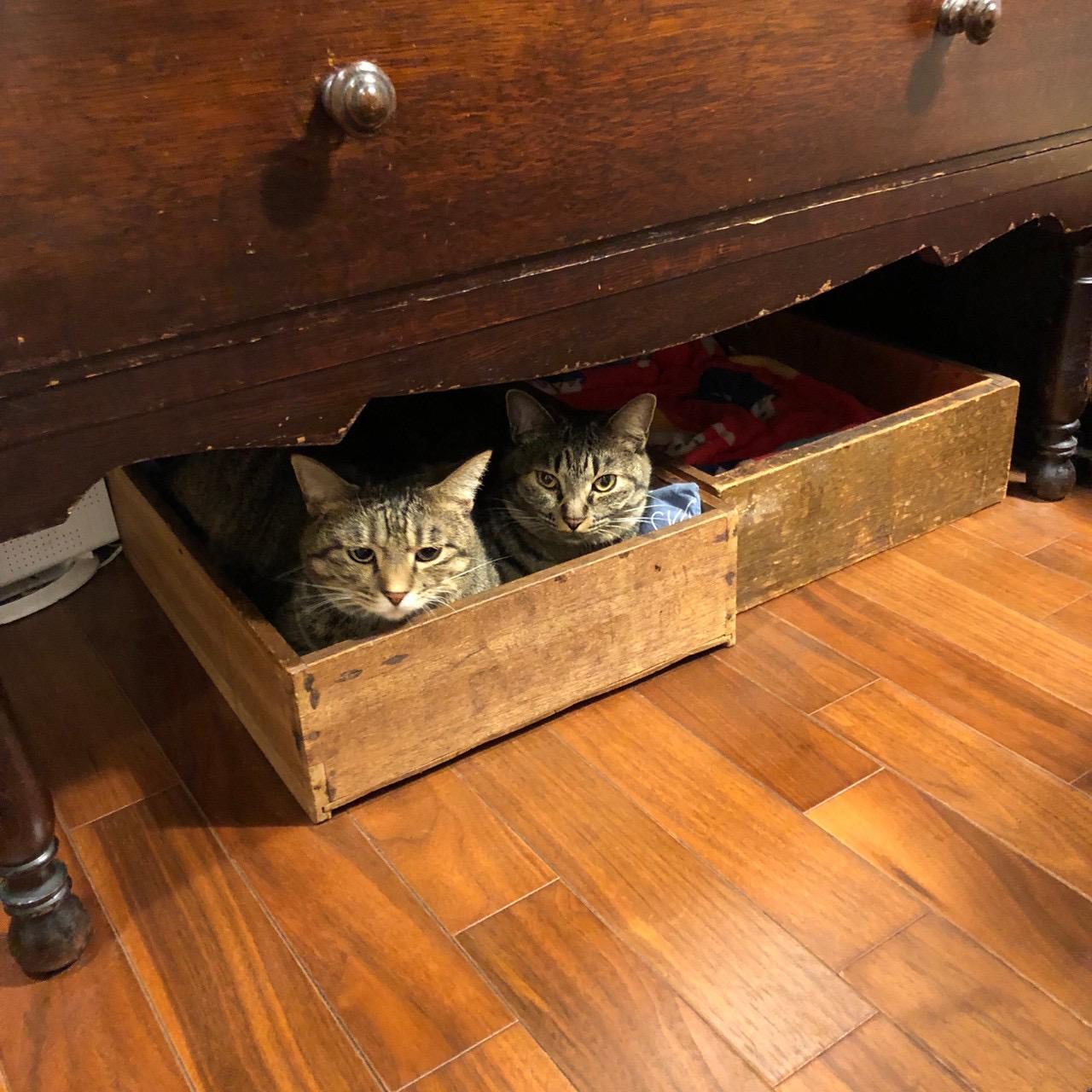 1つの木箱に2匹で収まる姿が愛おしいがんくんとサンちゃん
