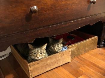 【今日のにゃんこ】がんくんとサンちゃん、仲良く木箱におさまっております
