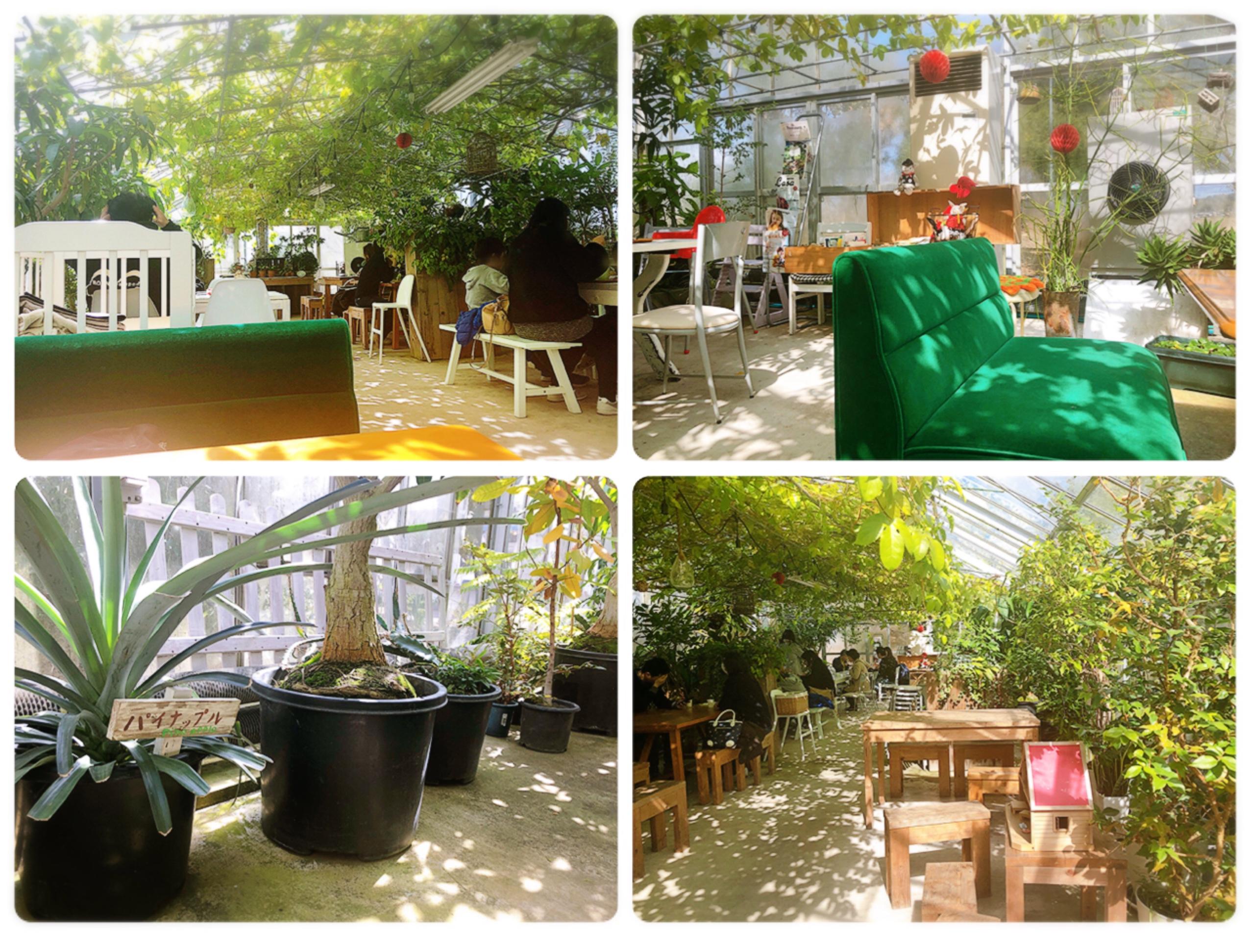 【#静岡】メロン農園直営❁緑に包まれたガーデンのようなカフェが魅力!甘〜いメロンをいただきました♩_3