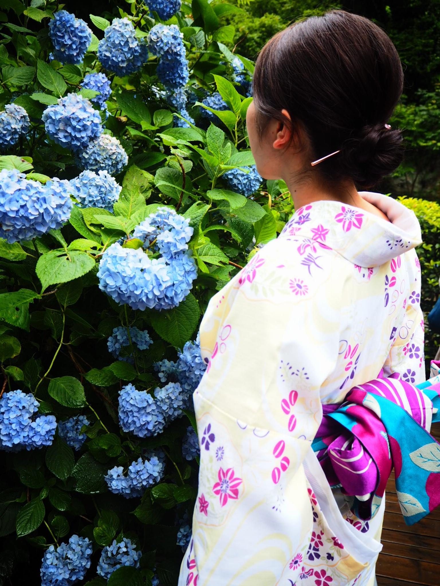 夏着物で鎌倉女子旅♡  紫陽花がとっても綺麗でした♡_13