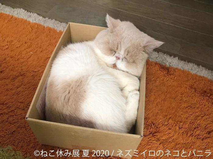 """可愛い""""にゃんこ""""が一堂に! 猫の合同写真展&物販展「ねこ休み展 夏 2020」が、東京・浅草橋で開催中_2"""
