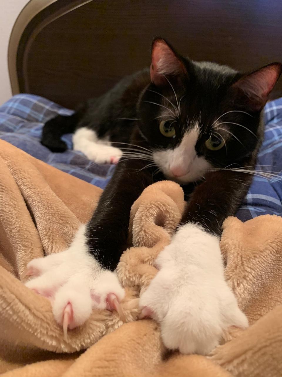 家でふわふわ毛布をモミモミしているルウくん