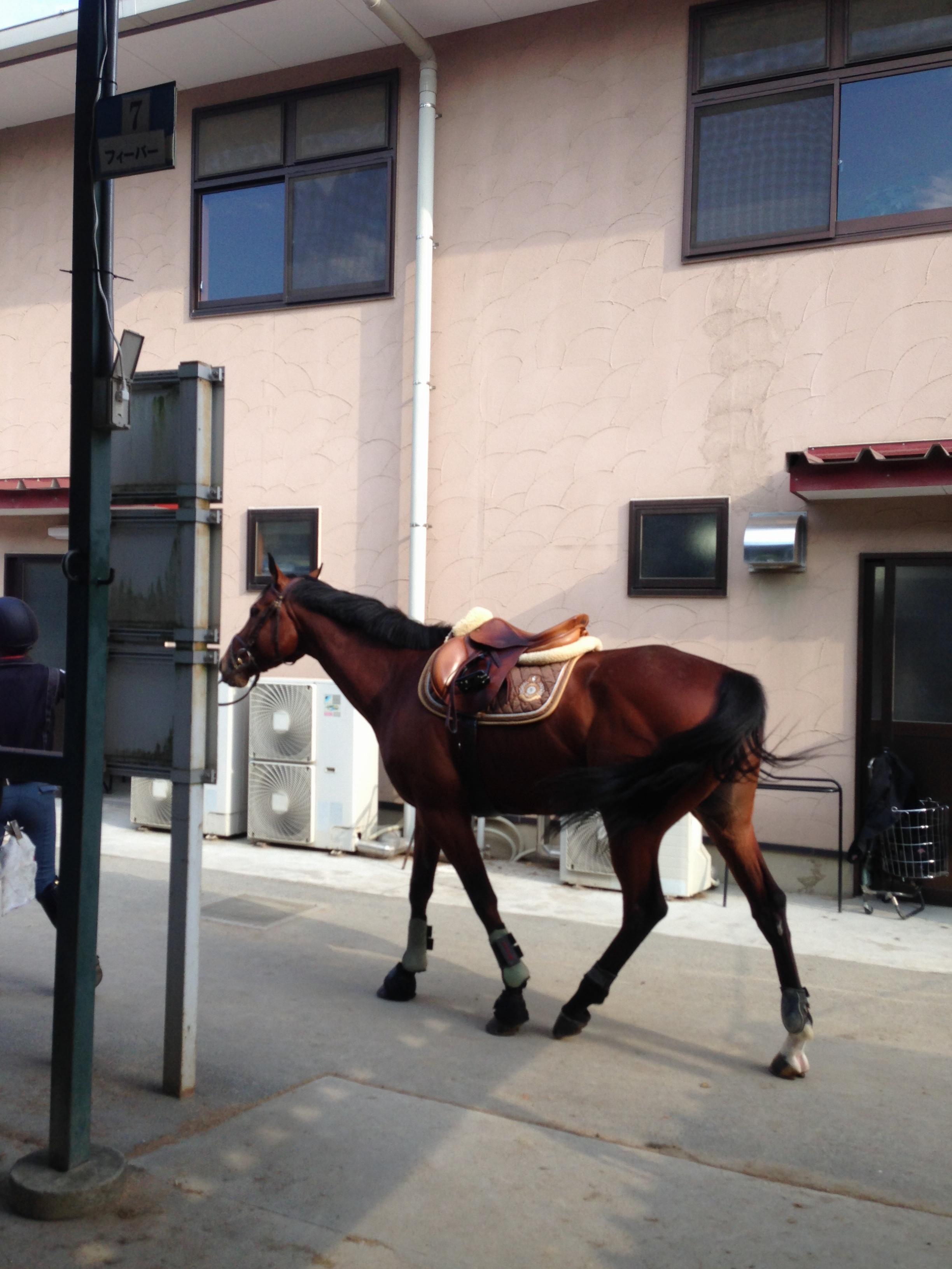 馬にアモーレ!!ステキな週末★都内で乗馬したことありますか?\(//∇//)\_6