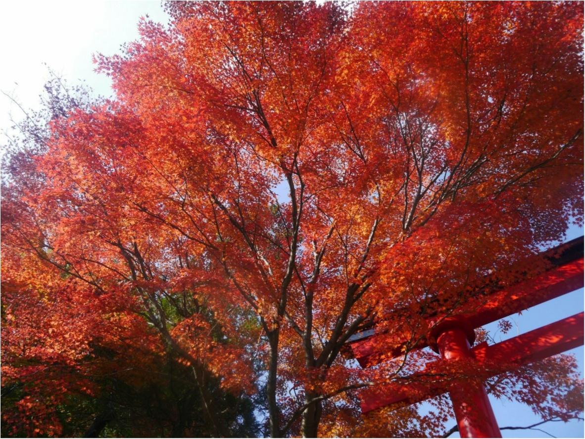 【しの散歩】世界一登山客が多い山!東京の紅葉スポットといえば、やっぱり『高尾山』がおすすめ♪_3