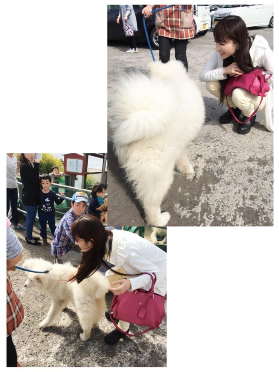 【ブサカワ犬わさお】に会える方法♡モアハピ◡̈のぞみ♡_12