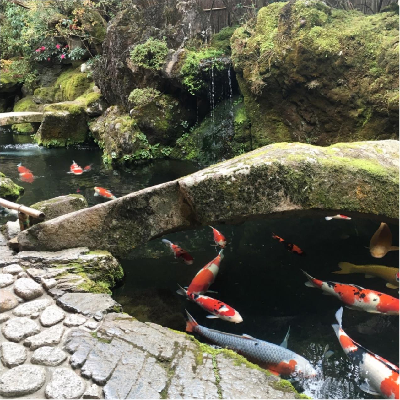 プルプルとろける食感♡ 京都で人気の《 草わらびもち 》はいかがですか?_4