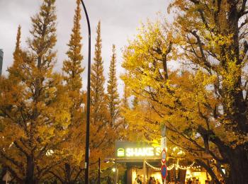 【神宮外苑いちょう並木】が見頃♡ 並木道沿いのおすすめグルメ情報2選!