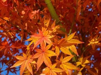 Premiumインフルエンサーズのインスタ拝見! 折田楓さんが、大分県・由布市へ。金鱗湖の紅葉がピークで美しすぎた♡