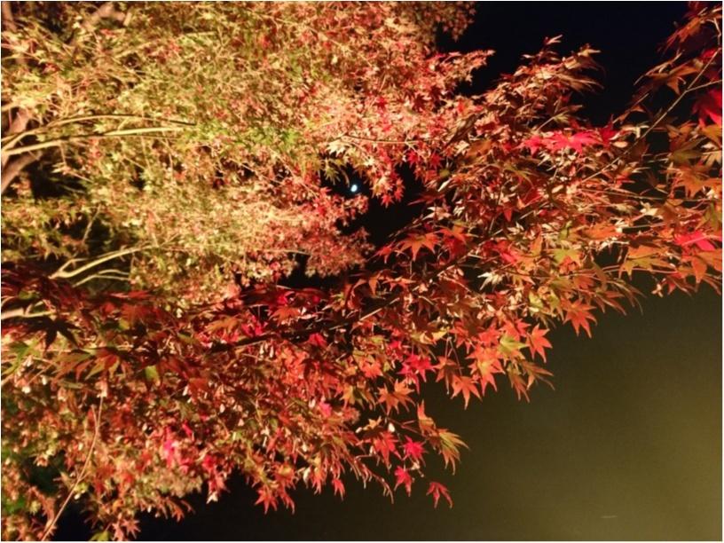 ≪京都・二条城≫先進アートとコラボ! 花がモチーフflowers by nakedライトアップ☆_2