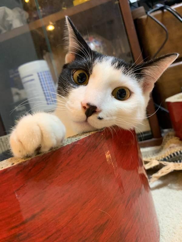 カメラ目線の猫・ベルくん