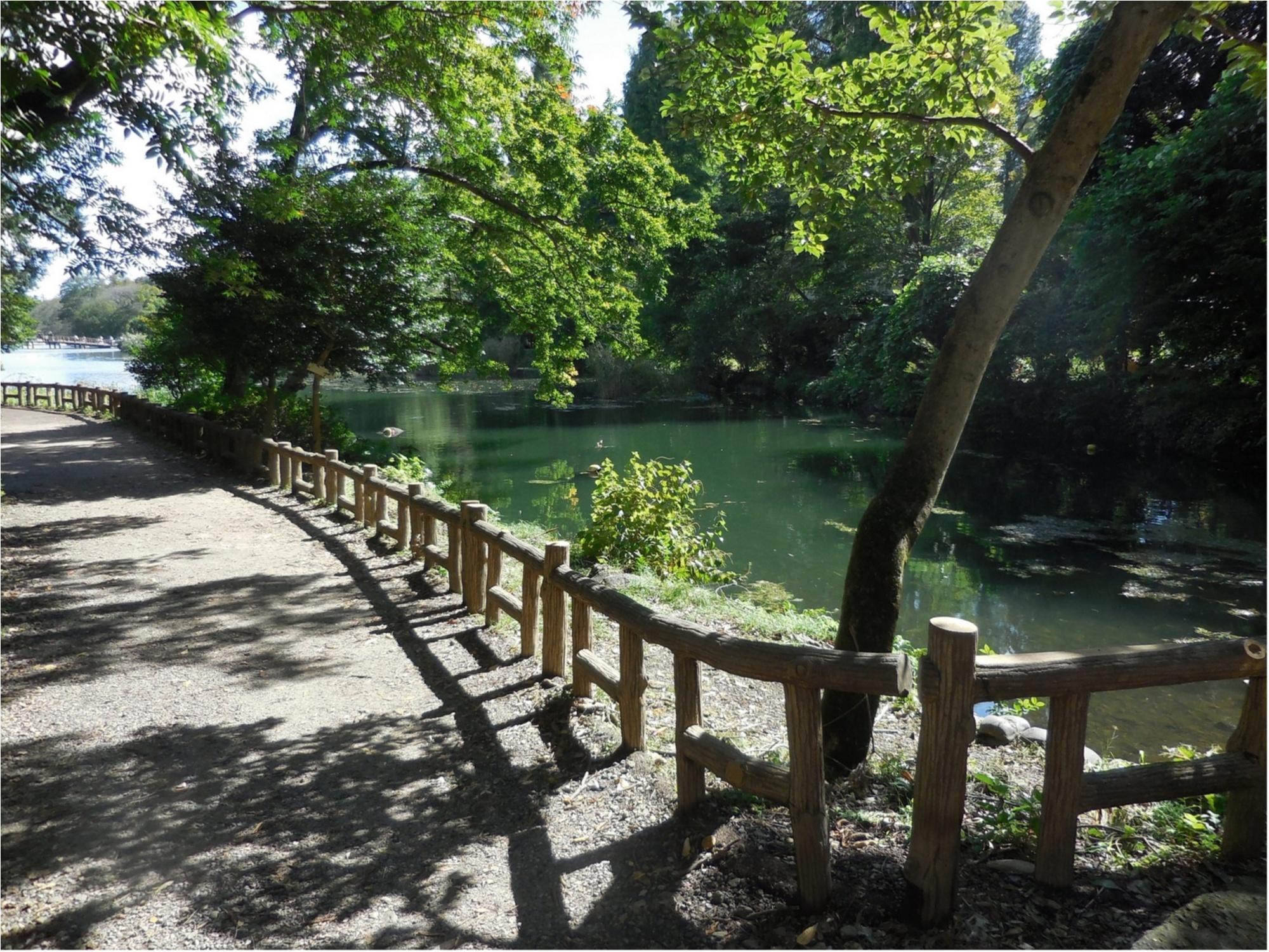 井の頭公園 吉祥寺 ウォーキング パスタ カフェ