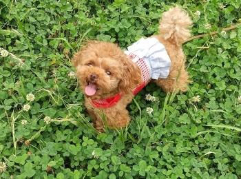 【今日のわんこ】緑のじゅうたんに、嬉しそうなテテちゃん♡