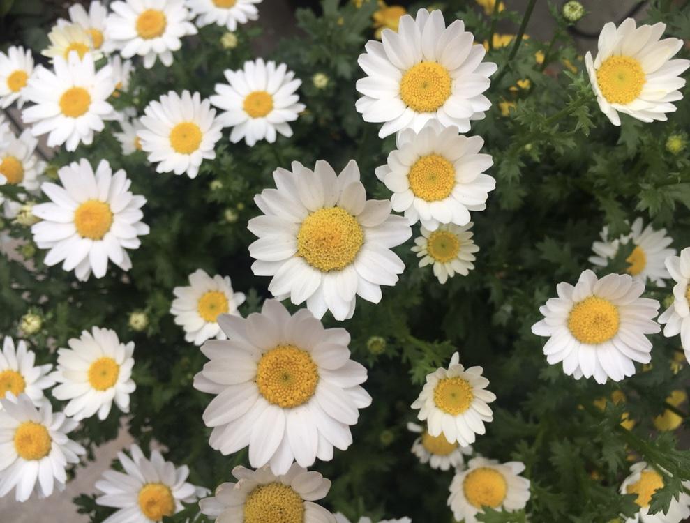 【漢方】春の心の浮き沈みを漢方から紐解く〜《eatrip seed club》@eatrip soil_2