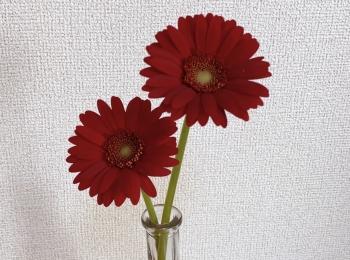 《花のある生活》で気分をあげる♡