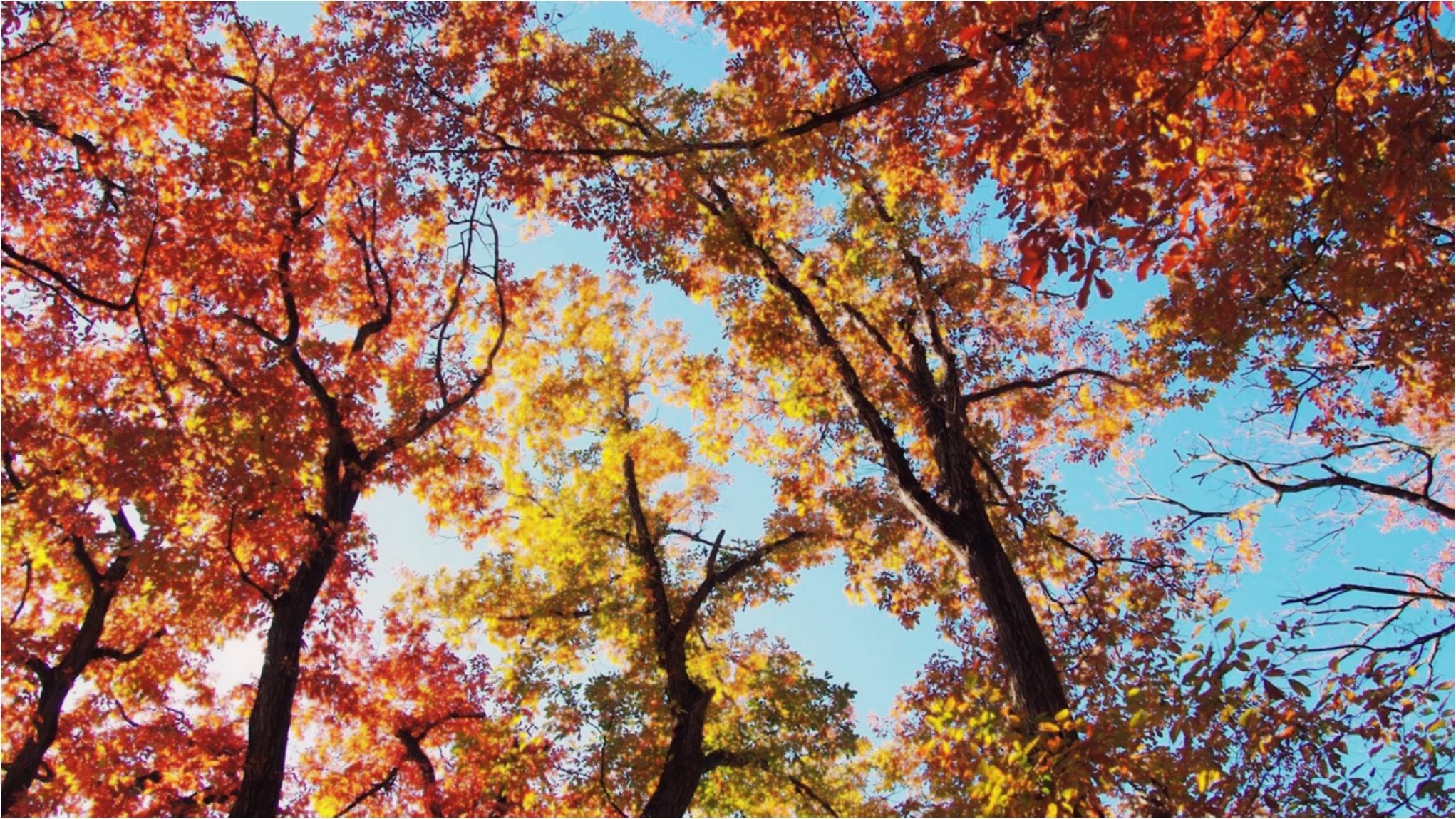 紅葉を満喫♩都心から二時間のとっておきの癒しスポット・秩父長瀞へ!_13