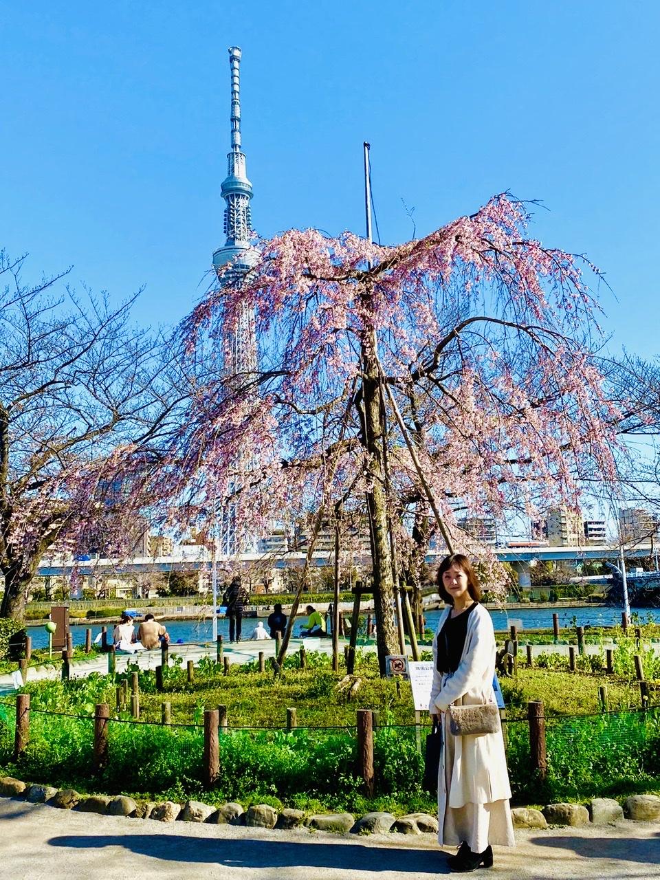 【隅田公園】お花見絶景スポット発見!《桜×東京スカイツリー》のコラボが映え度抜群♡_8