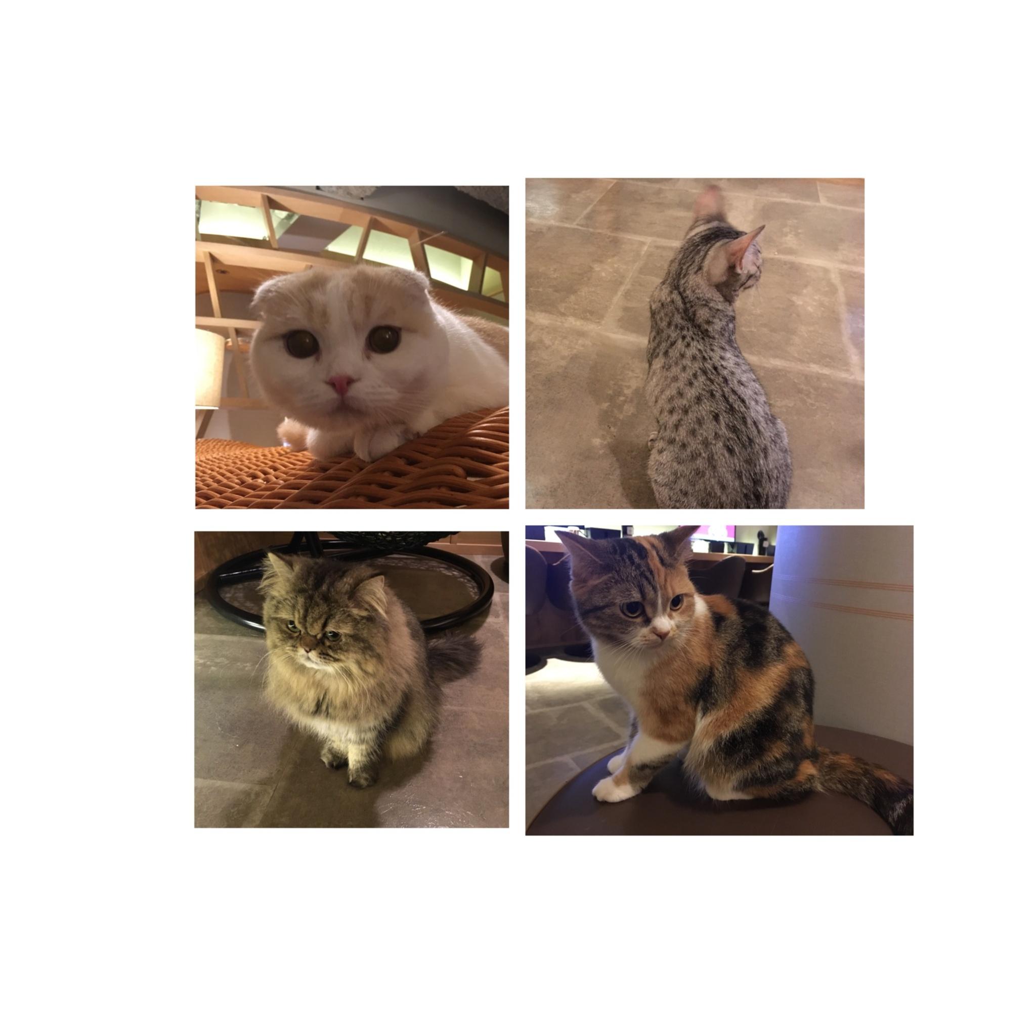 【GWはここで決まり!】日本最大級の猫カフェが新宿に⁈オシャレなラウンジカフェで可愛い猫たちに癒される!_10