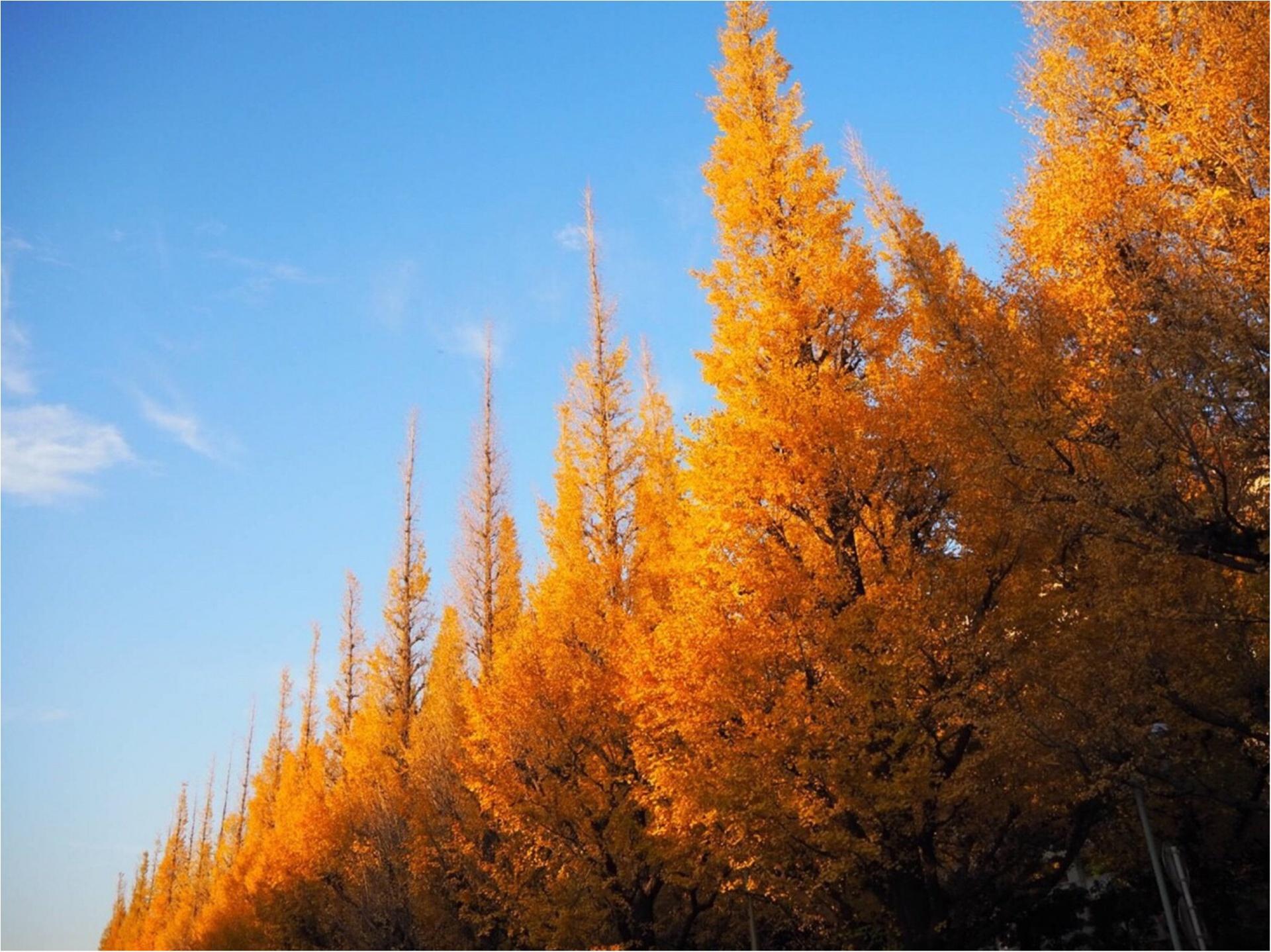 【紅葉スポット】美しすぎる黄色のトンネル《神宮外苑イチョウ並木》今が見頃です♡_7