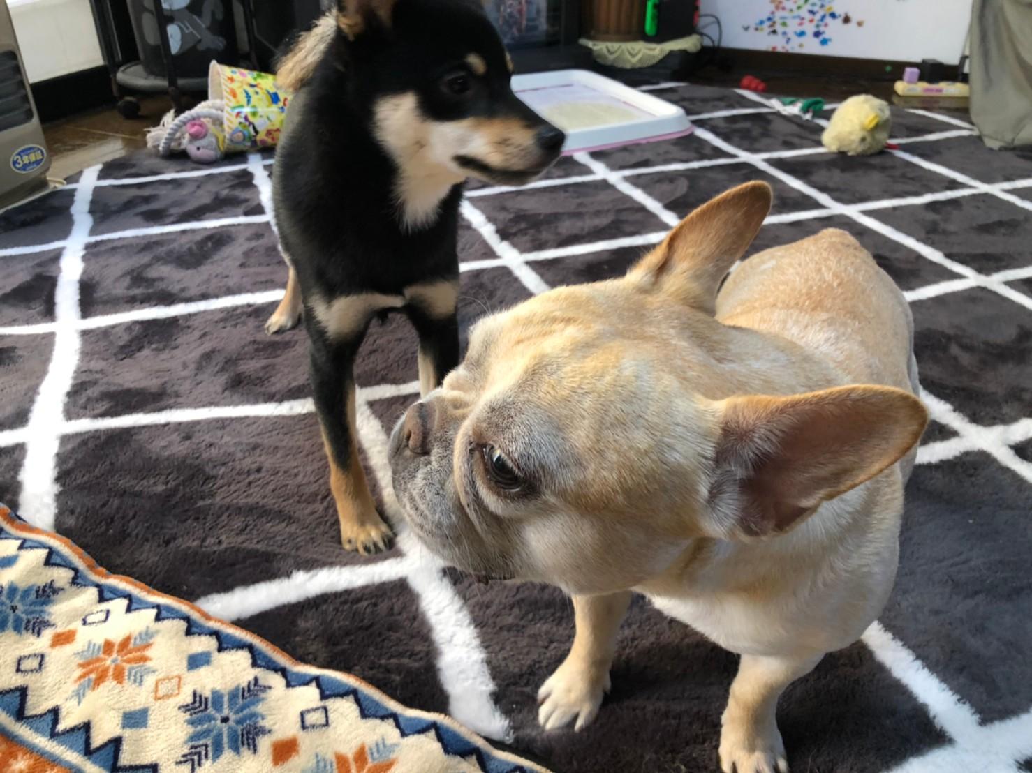 犬・まつことポンちゃん
