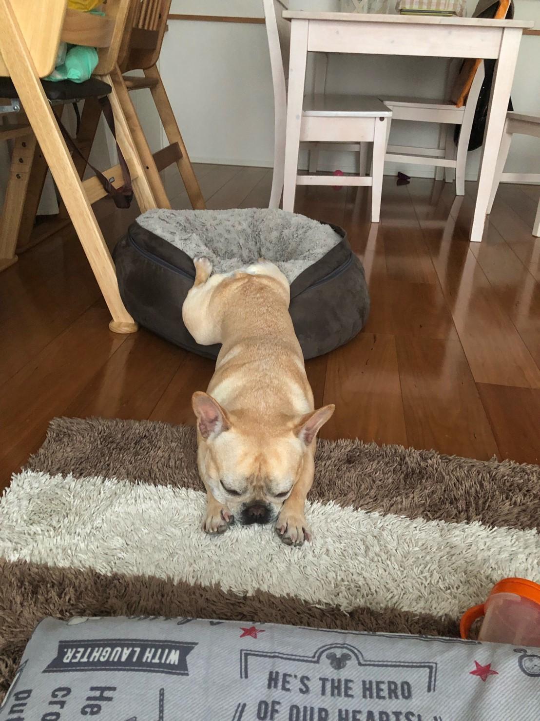 クッションに後ろ足がひっかかって伸びている犬・まつこ