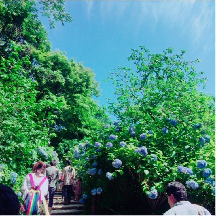 <紫陽花だらけのお寺?!>写真映え間違いなしの「明月院」とは…☻_3