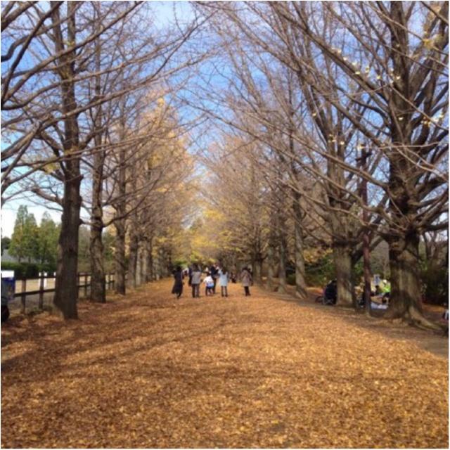 【私がおすすめする紅葉スポット】一度は歩きたい!《イチョウ並木の黄色いじゅうたん》がココにあります!!_3