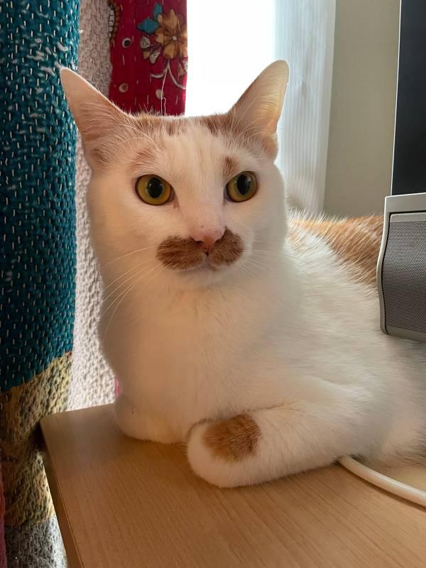 家の中で玄関のベルにビビる猫・ラビくん