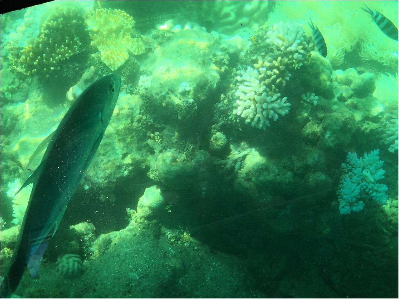 海も森林も大自然をまるっと満喫するなら《オーストラリア・ケアンズ》へ!_4