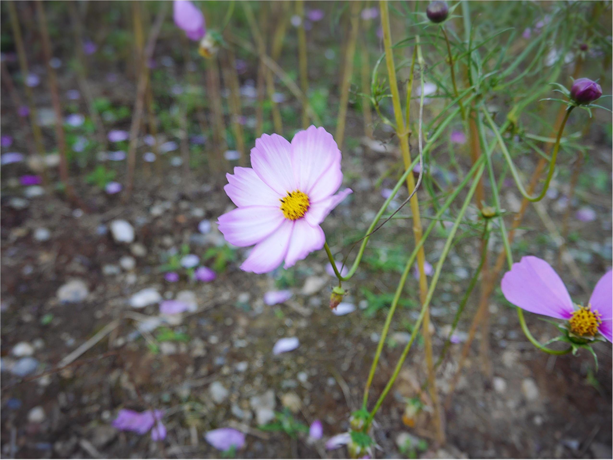 ★晴れた日は、カメラを持って昭和記念公園へ☺︎my camera は『LUMIX』!!_4