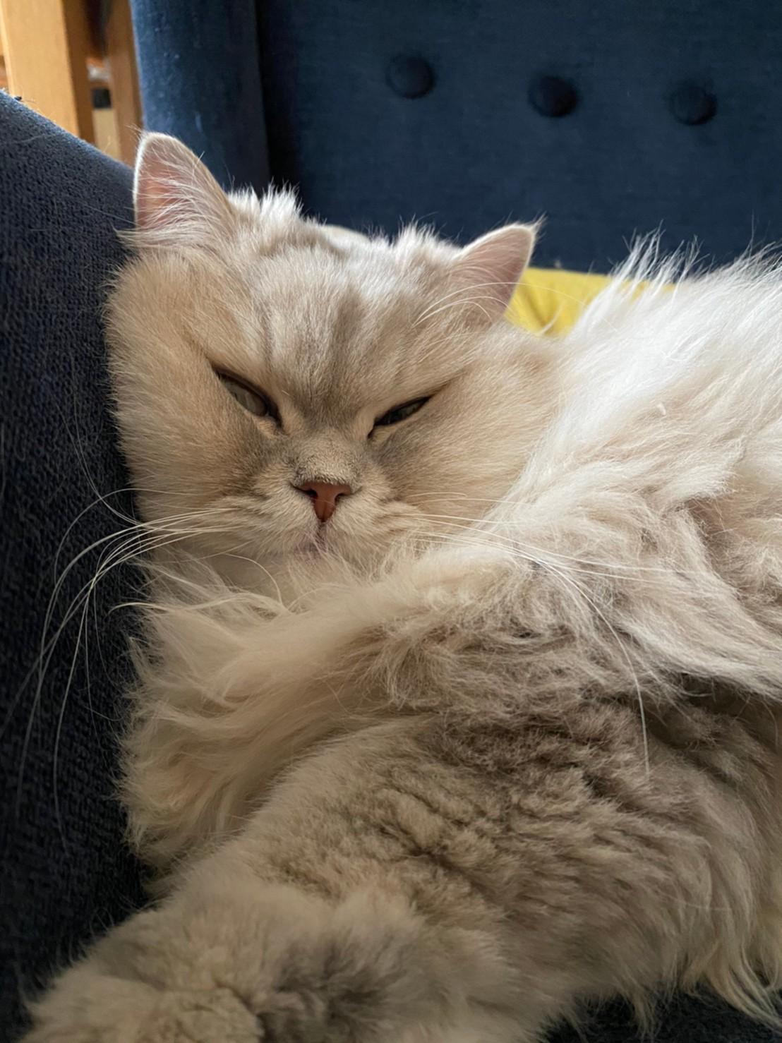 ブサカワな表情で眠る猫・ココンちゃん