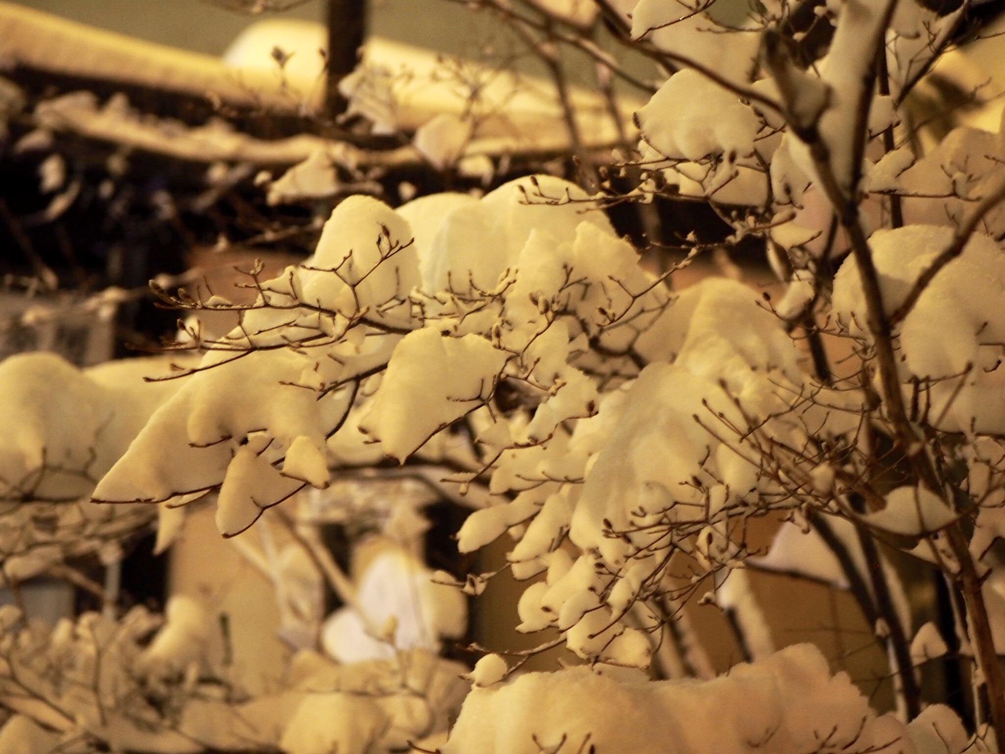 【草津温泉】雪景色がエモすぎる温泉旅♨︎♡_7