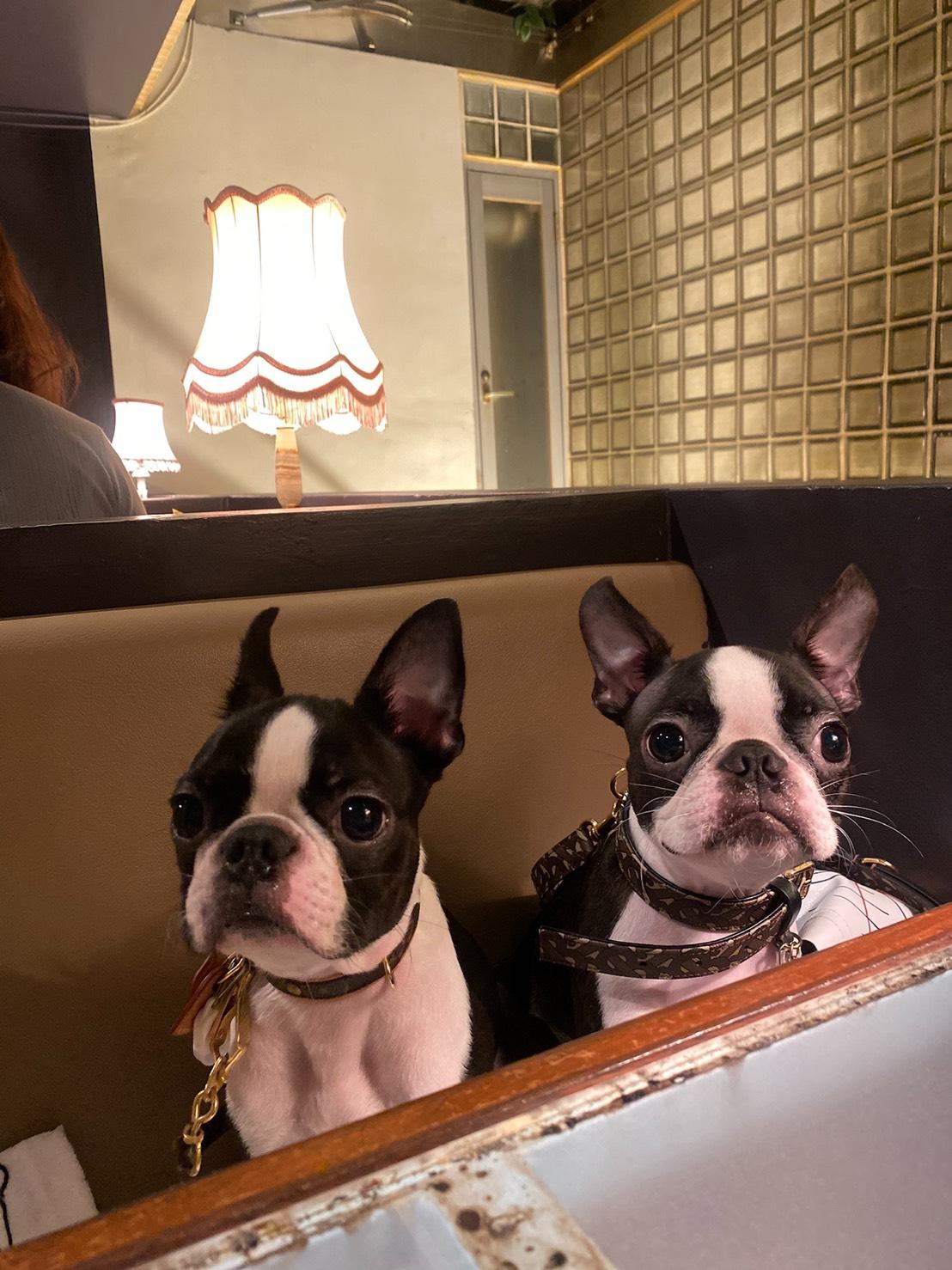 おしゃれなカフェに緊張している犬・へちまちゃんとアルコくん