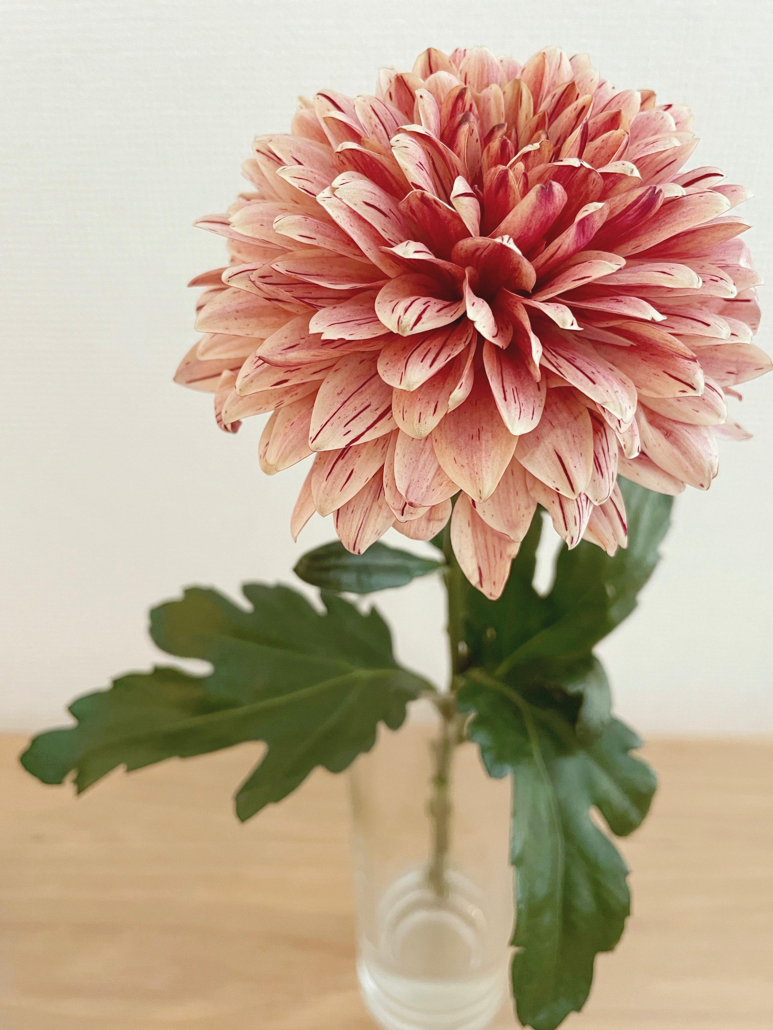【おうち時間】お部屋に花を取り入れて癒し空間に♡_2