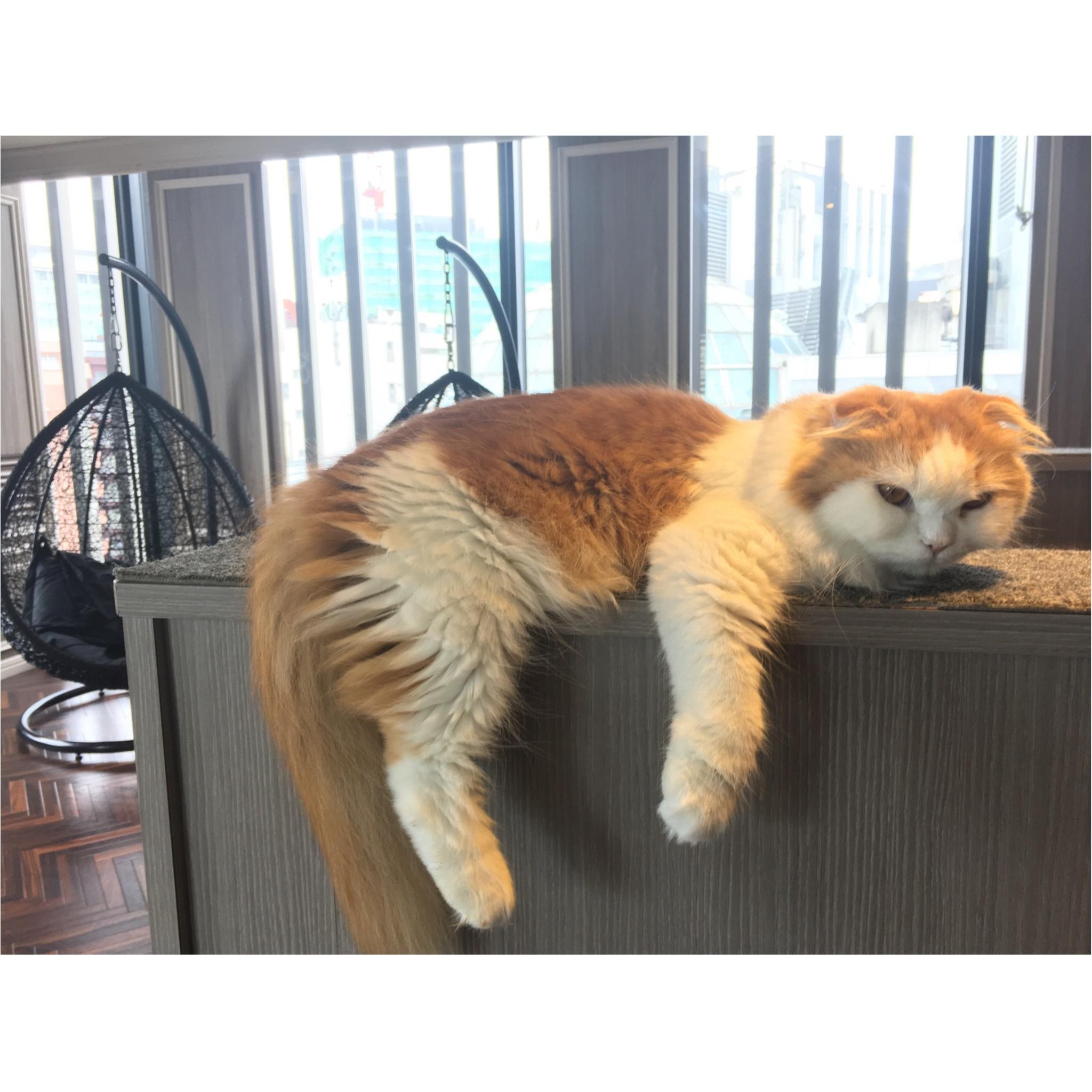 【猫カフェ】渋谷で癒しの猫カフェ♡今ならカワイイ子猫にも会えちゃう♪_13