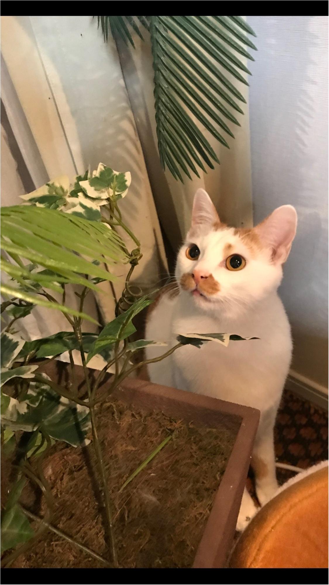 【今日のにゃんこ】気になっちゃう! 観葉植物とラビくん_1