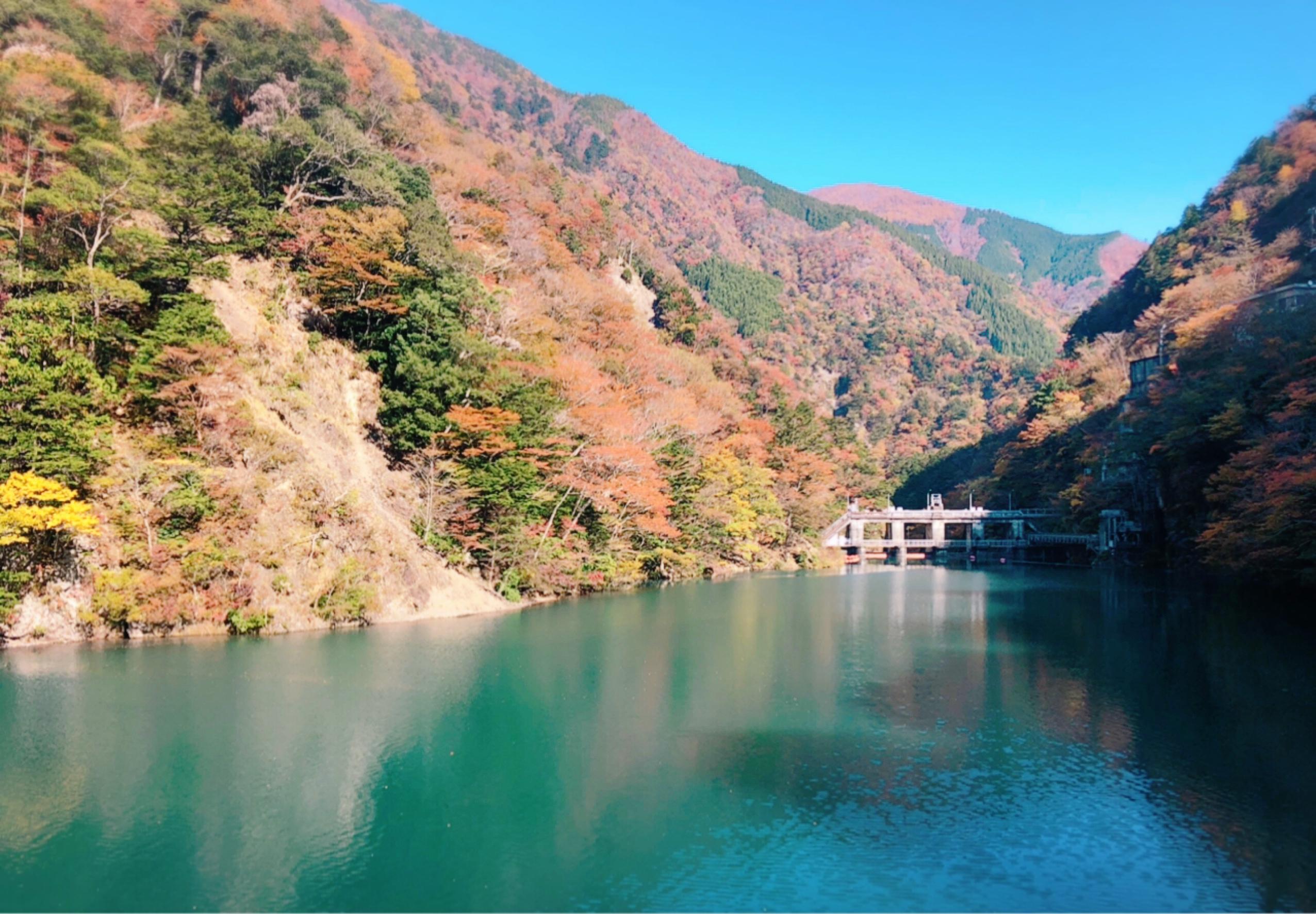 【#静岡】《夢の吊り橋×秋・紅葉》美しすぎるミルキーブルーの湖と紅葉のコントラストにうっとり♡湖上の吊り橋で空中散歩気分˚✧₊_7