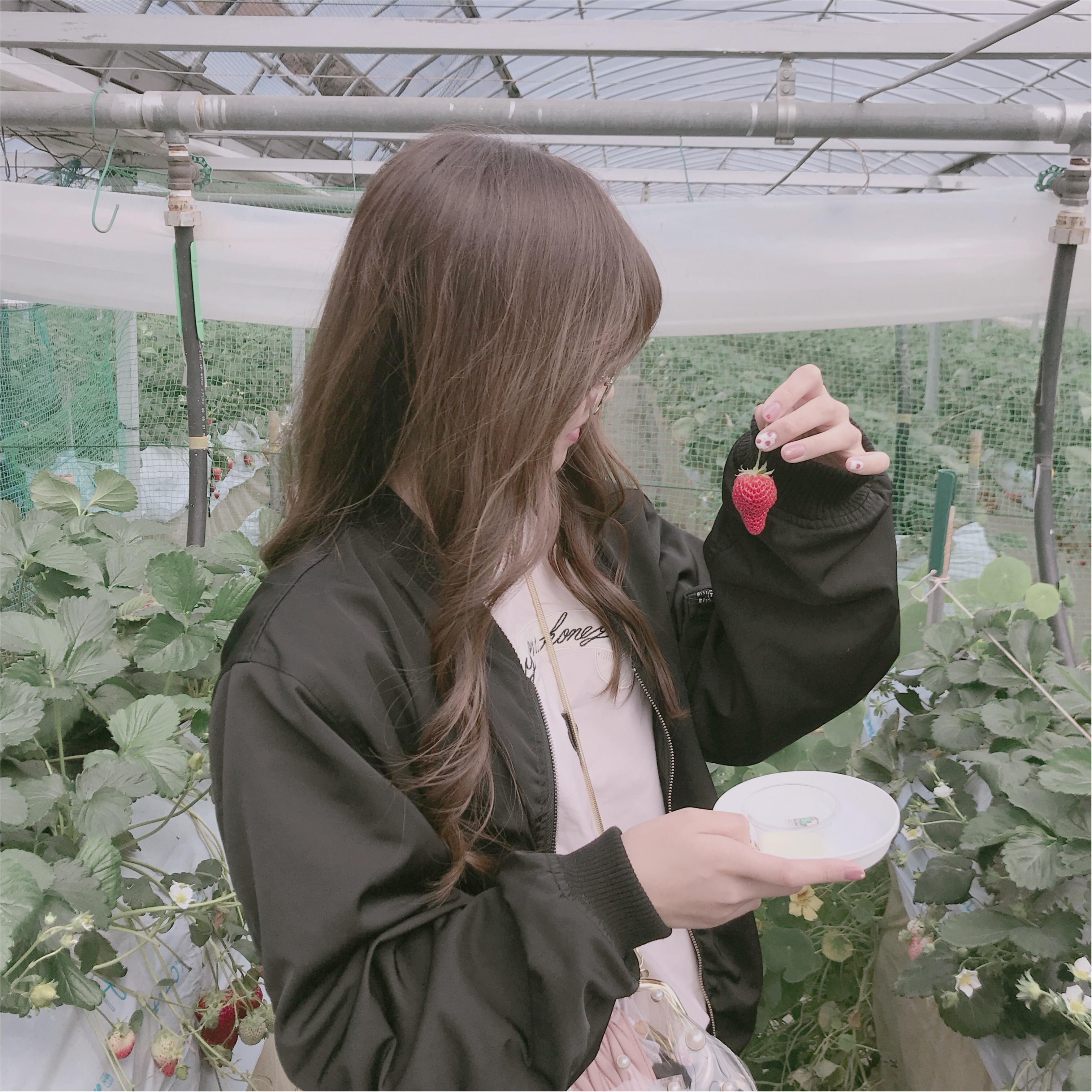 春といえば【いちご狩り】なんと、白イチゴが食べ放題のいちご園があるんです❤︎_2