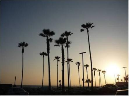 写真でも、きっと伝わるこの魅力✨朝から晩まで眺めた《*ロサンゼルスの広い空*》_11