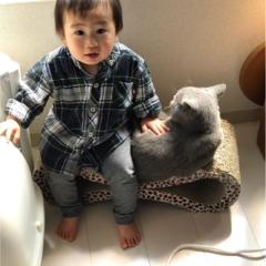 【今日のにゃんこ】キッズにメロメロ♡ お兄ちゃんぶりたいレオくん