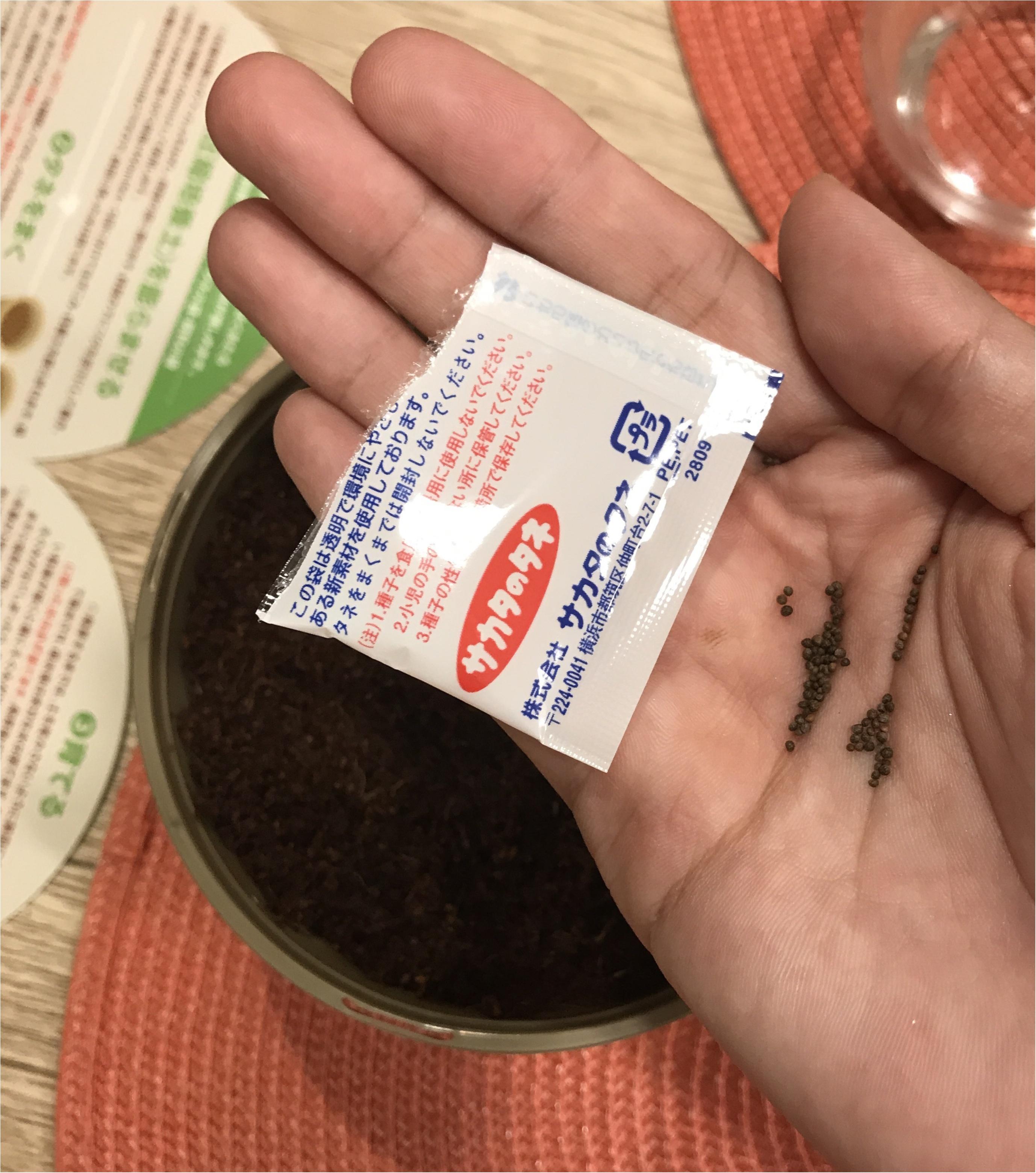 【life】コンビニで売っていた〇〇を試してみます!プチ家庭菜園デビュー!!_5